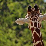 多摩動物公園!入園料金・割引チケットやアクセス・駐車場情報!混雑情報!入園無料日やランチについても紹介!