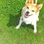 犬の散歩の時にうんちが臭わない防臭袋BOSが良い【散歩・防臭】